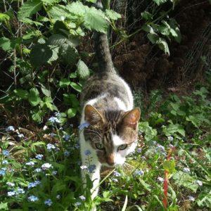 Kater Finlay läuft im Garten direkt auf die Kamera zu