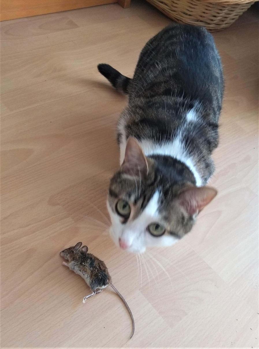 Katze Yoki und die tote Feldmaus