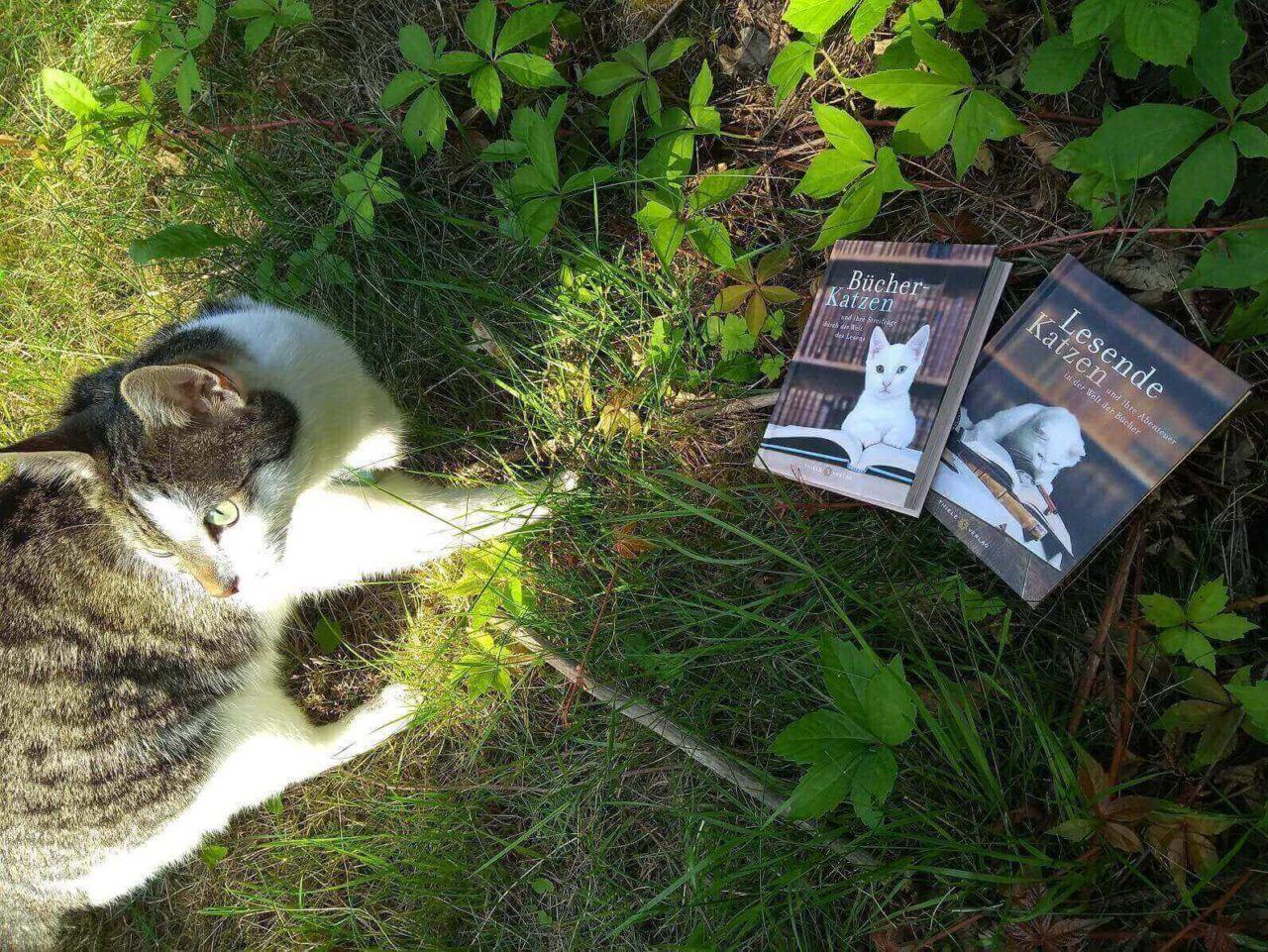 Kater Finlay und die Bildbände Bücher-Katzen und Lesende Katzen