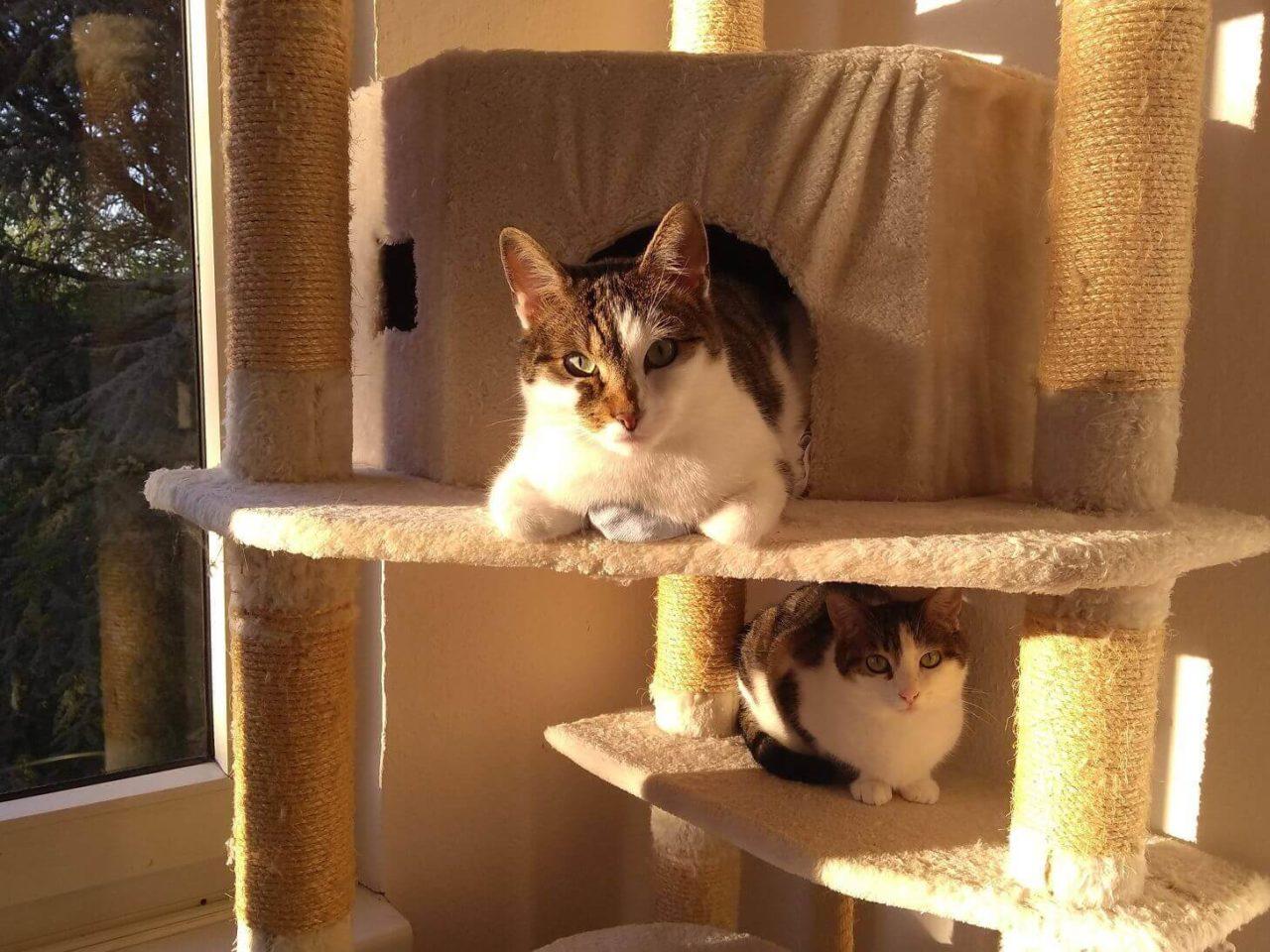 Kater Finlay und Katze Yoki wünschen einen schönen Weltkatzentag