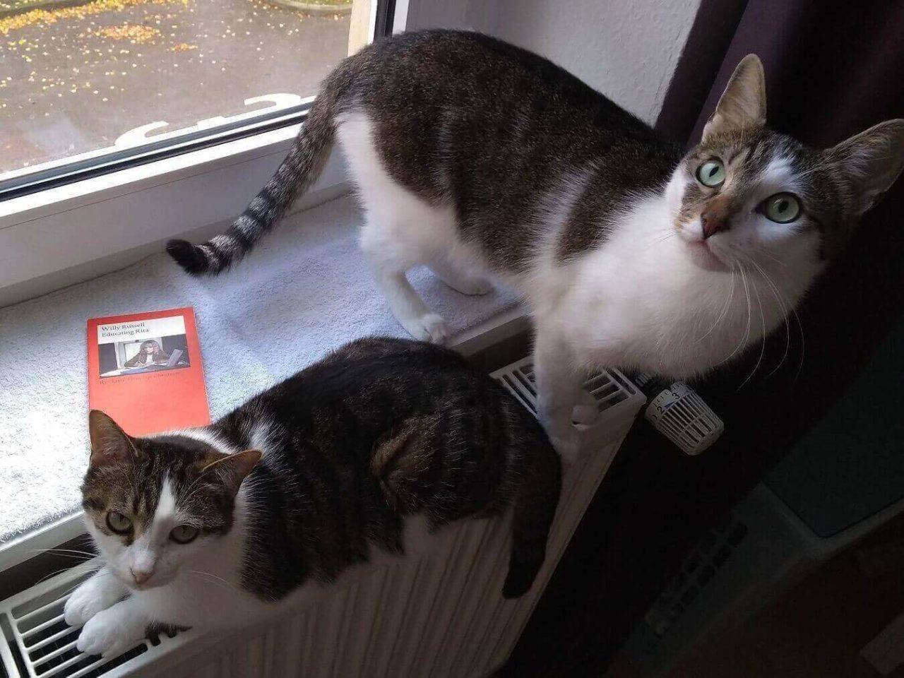 Die Katzen auf der Heizung und Educating Rita auf der Fensterbank