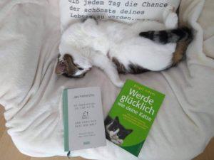 Read more about the article Zum Weltkatzentag: Von Katzen lernen